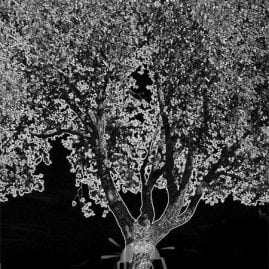 Black and White sketch effect Tree