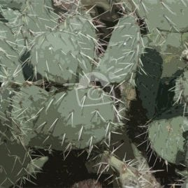 Cut Out Prickly Pear