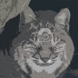 Cut Out Smiling Bobcat