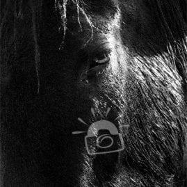 Sunlit Horse