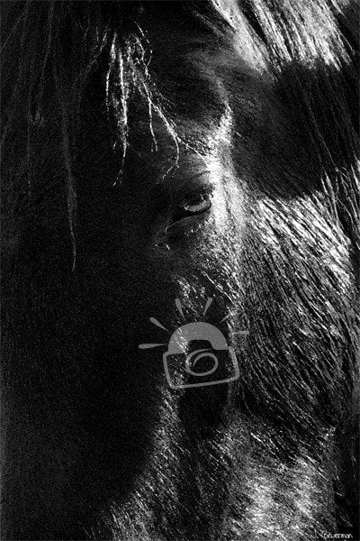 A close up view of a horse in the bright sunlight.