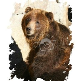 AP Sad Grizzly Bear