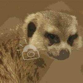 Cut Out Meerkat