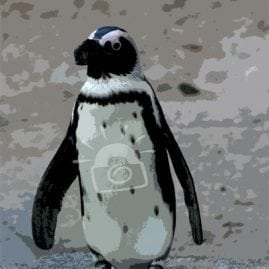 Cut Out Single Penguin