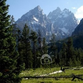 Teton Meadow