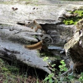 Shy Squirrels