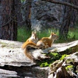 Talkative Squirrels