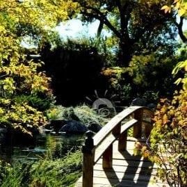 Shady Bridge