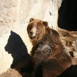 Bear and Shadow
