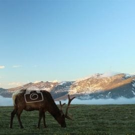Elk with a View