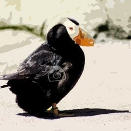 Cut Out Puffin