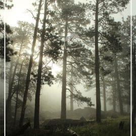 Misty Morning  (Border)