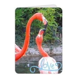 For Flamingos – 5×7 Card