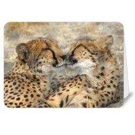 Cheetah Bros – 5×7 card