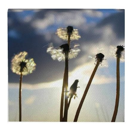 dandelion-2-12×12-canvas