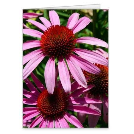 pink-eyed-susans-card
