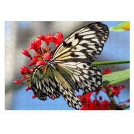 Butterfly – 252 Piece Puzzle