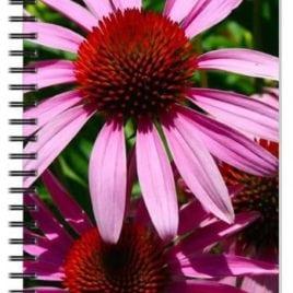 Pink Eyed Susans Notebook