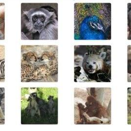 Zoo Animal Memory Game