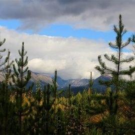 Trees to Mountains