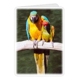 Parrot Friends – 5×7 Card