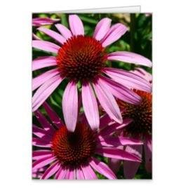 Pink Eyed Susans – 5×7 Card