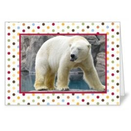 Polar Bear – 5×7 Card