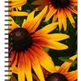 Bright Black Eyed Susan Notebook